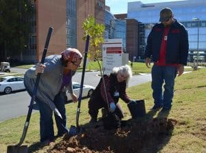 UAMS grounds manager Penny Talbert (center) gets help planting a tree from pharmacy student Erin Puryear and UAMS landscape technician Kenneth Bailey.