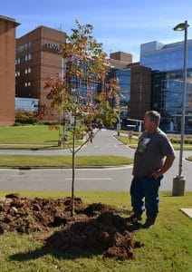 Calvin Helmes, a UAMS landscape technician, checks to see that a Chinese pistachio tree is ready to plant along Hooper Drive.