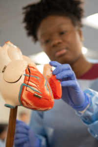 A second-year medical student explains a model of the heart to participants in the Academy of Pre Health Scholars.