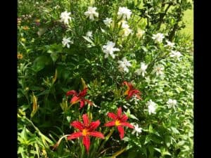 Lee Butler's Garden