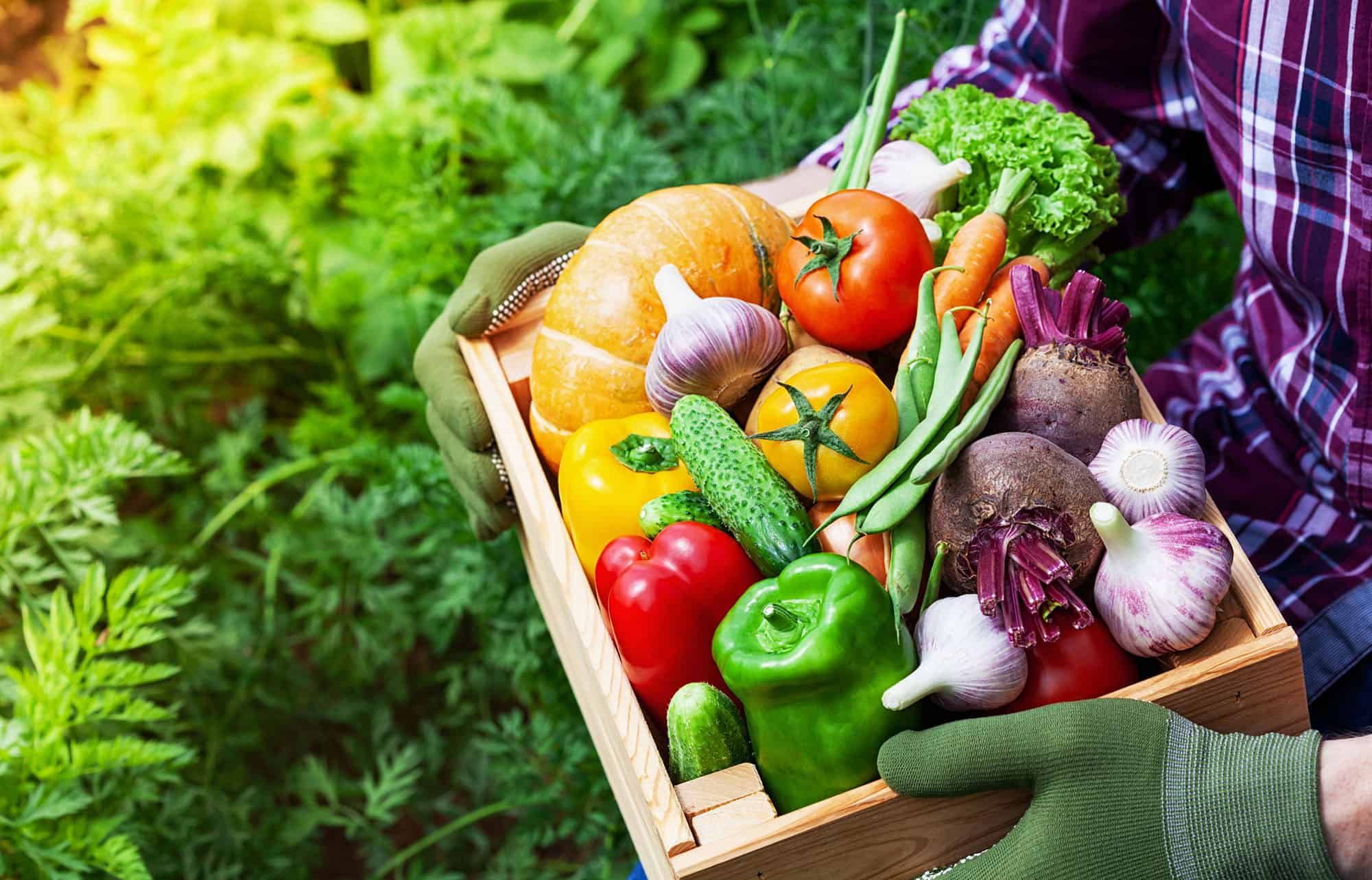 UAMS purchases 20% of its food from local sources, including fruits, vegetables, poultry, rice, dairy, bread and coffee.