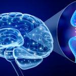 What causes Parkinson's Disease?